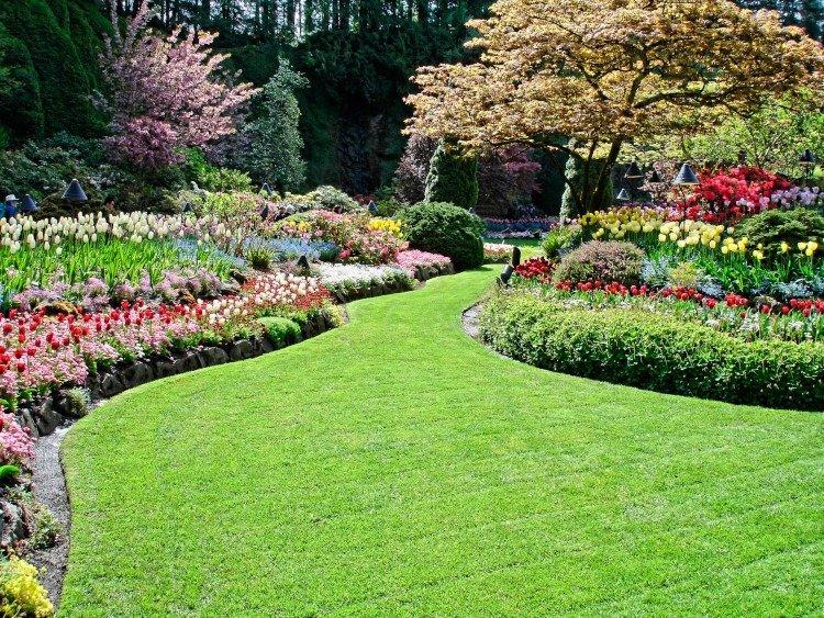 new-landscapeplant